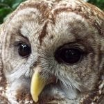 Woodlands Nature Station Celebrates Birds of Prey