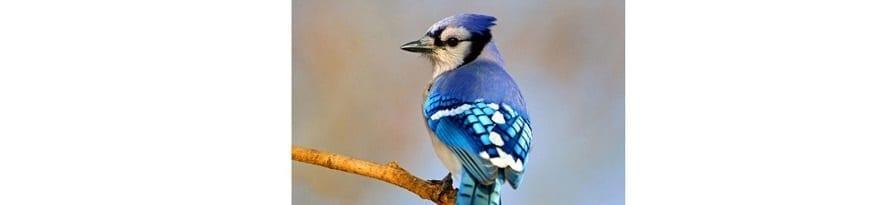 Bird County LBL